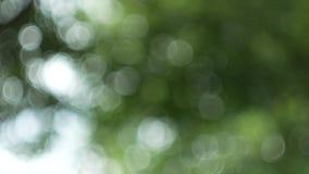 De groene aard abstracte achtergrond van bladwind blaast in bos, groene bokeh uit nadrukachtergrond van aardbos stock videobeelden