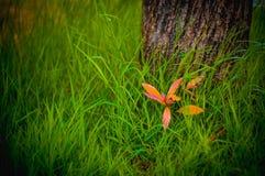 de groene aard van het boomgras royalty-vrije stock fotografie