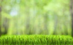 De groene achtergrond van de gras abstracte aard Stock Foto