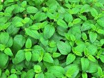 De groene Achtergrond van Bladeren stock foto