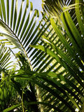 De groene achtergrond van de bladerentextuur Royalty-vrije Stock Afbeelding