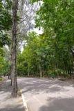 De groene achtergrond van de boomtuin Stock Afbeeldingen