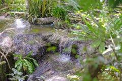 De groene achtergrond van de boomtuin Stock Afbeelding