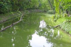 De groene achtergrond van de boomtuin Stock Foto's