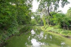 De groene achtergrond van de boomtuin Royalty-vrije Stock Afbeeldingen