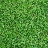 De groene achtergrond van de grastextuur voor voetbalsport of voetbalspor Stock Afbeelding