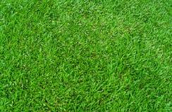 De groene achtergrond van de grastextuur voor voetbalsport of voetbalspor Royalty-vrije Stock Afbeelding