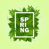 De groene achtergrond van de lente Royalty-vrije Stock Foto's