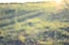 De groene Achtergrond van de Motie De zomerzon, boke Royalty-vrije Stock Fotografie