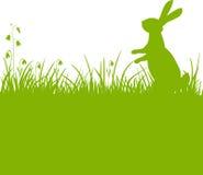 De groene achtergrond van de paashaas Stock Fotografie