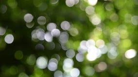 De groene achtergrond van het aardonduidelijke beeld met bokeh stock video