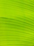 De groene achtergrond van het banaanblad Stock Foto