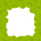De groene Achtergrond van het Blad Royalty-vrije Stock Afbeeldingen