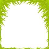De groene Achtergrond van het Blad Royalty-vrije Stock Foto's