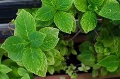 De groene Achtergrond van het Blad Stock Foto