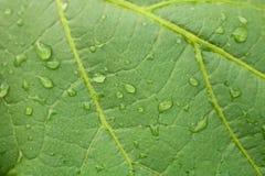 De groene Achtergrond van het Blad stock foto's