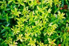 De groene Achtergrond van het Blad Stock Fotografie