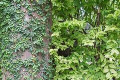De groene Achtergrond van het Blad Stock Afbeelding