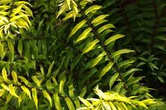 De groene achtergrond van het bladerenzonlicht Stock Foto's