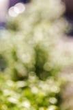 De groene achtergrond van het bokeh lichte abstracte onduidelijke beeld Stock Afbeelding