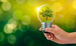 Is de groene achtergrond van het Bokehonduidelijke beeld het bos en de bomen in het licht Concepten milieubehoud en het globale v royalty-vrije stock foto's