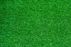 De groene achtergrond van het gebiedsgras Stock Afbeelding