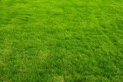 De groene Achtergrond van het Gras stock foto