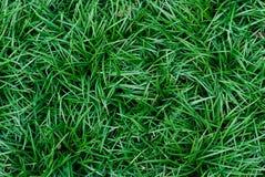 De groene achtergrond van het gras natuurlijke gazon in hoogste mening Stock Afbeeldingen