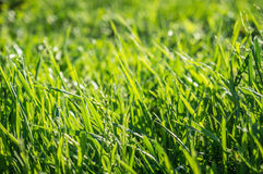 De groene achtergrond van het grasgazon Stock Fotografie