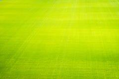 De groene achtergrond van het grasgebied, textuur, patroon Royalty-vrije Stock Foto's