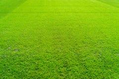 De groene achtergrond van het grasgebied, textuur, patroon Stock Afbeeldingen