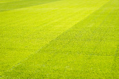 De groene achtergrond van het grasgebied, textuur, patroon Stock Foto
