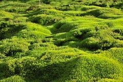De groene achtergrond van het mos. royalty-vrije stock foto's