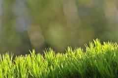 De groene achtergrond van het mos. royalty-vrije stock afbeelding