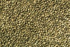 De groene achtergrond van koffiebonen. Royalty-vrije Stock Afbeeldingen