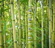 De groene achtergronden van de bamboeaard Stock Foto