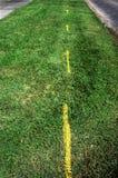 De Groene Alternatieven van Ilustrates van de grasweg voor Aard op Humurous-Manier stock foto