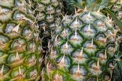 De groene ananassen sluiten omhoog, achtergrond stock afbeelding