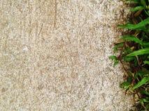 De groene Barst van de grastextuur met concrete achtergrond Royalty-vrije Stock Afbeelding