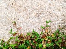 De groene Barst van de grastextuur met concrete achtergrond Royalty-vrije Stock Afbeeldingen