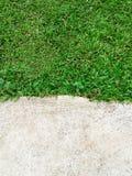De groene Barst van de grastextuur met concrete achtergrond Stock Foto