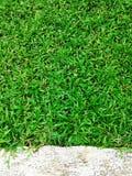 De groene Barst van de grastextuur met concrete achtergrond Royalty-vrije Stock Fotografie