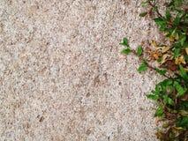 De groene Barst van de grastextuur met overlegachtergrond Royalty-vrije Stock Afbeelding