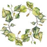 De groene berk van het de herfstblad Botanisch de tuin bloemengebladerte van de bladinstallatie Geïsoleerd illustratieelement vector illustratie