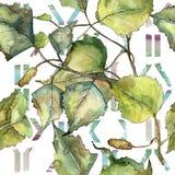 De groene berk van het de herfstblad Botanisch de tuin bloemengebladerte van de bladinstallatie Naadloos patroon als achtergrond stock illustratie