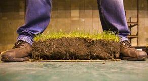 De groene besnoeiing van het grasgazon Stock Foto