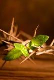 De groene blad en kroon van Pasen Royalty-vrije Stock Fotografie