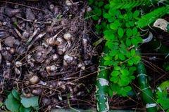 De groene bladeren, en de wortels die kunnen worden gezien ter plaatse groeien Stock Fotografie