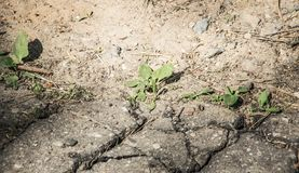 De groene bladeren groeien van een barst in het asfalt stock afbeeldingen