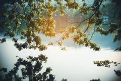 De groene bladeren met voor de rivier en het gouden licht is achter Royalty-vrije Stock Foto